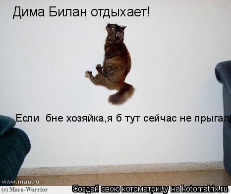 Котоматрица: Дима Билан отдыхает! Если  бне хозяйка,я б тут сейчас не прыгал