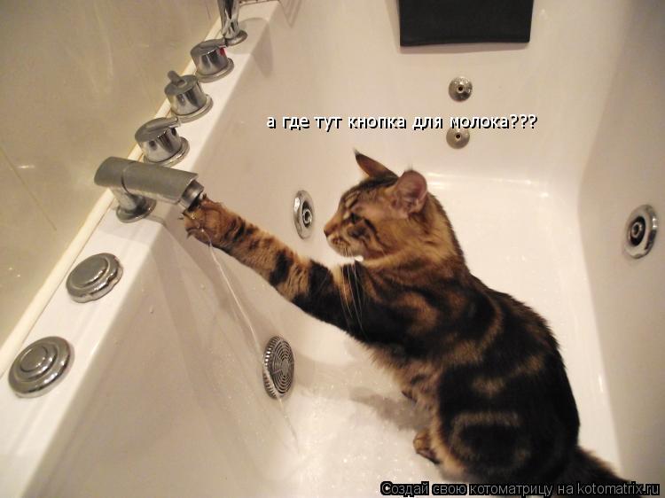Котоматрица: а где тут кнопка для молока???