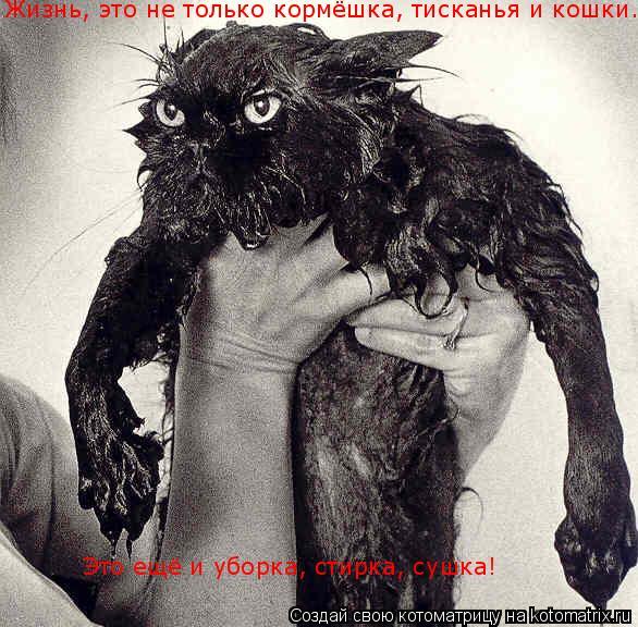 Котоматрица: Жизнь, это не только кормёшка, тисканья и кошки...  Это ещё и уборка, стирка, сушка!