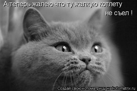 Котоматрица: А теперь жалею что ту жалкую котлету не съел !