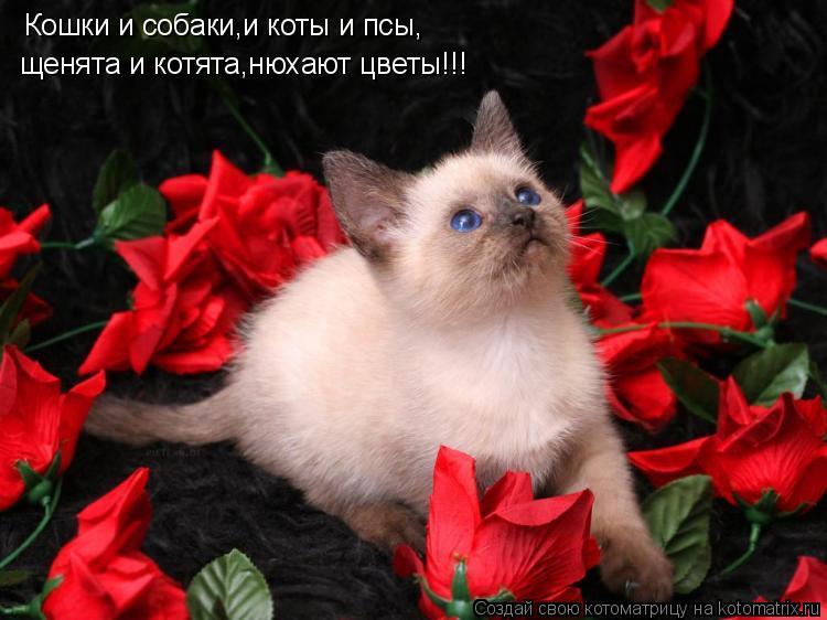 Котоматрица: Кошки и собаки,и коты и псы,щенята и котята,нюхают цветы!!! Кошки и собаки,и коты и псы, щенята и котята,нюхают цветы!!!