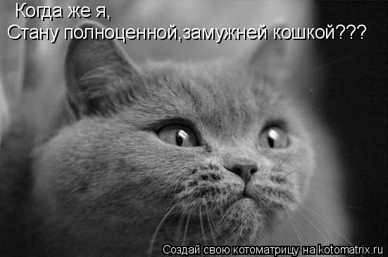 Котоматрица: Когда же я, Стану полноценной,замужней кошкой???