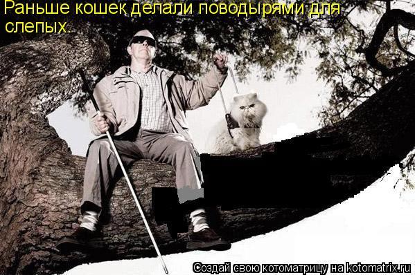 Котоматрица: Раньше кошек делали поводырями для слепых.