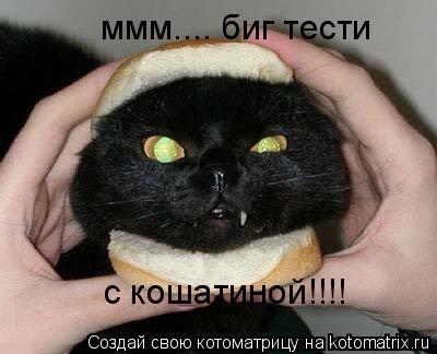 Котоматрица: ммм.... биг тести с кошатиной!!!!