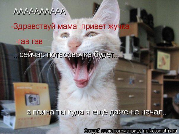 Котоматрица: АААААААААА  -Здравствуй мама ,привет жучка -гав гав ...сейчас потасовочка будет... э псина ты куда я ещё даже не начал...