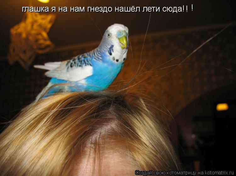 Котоматрица: глашка я на нам гнездо нашёл лети сюда! ! !
