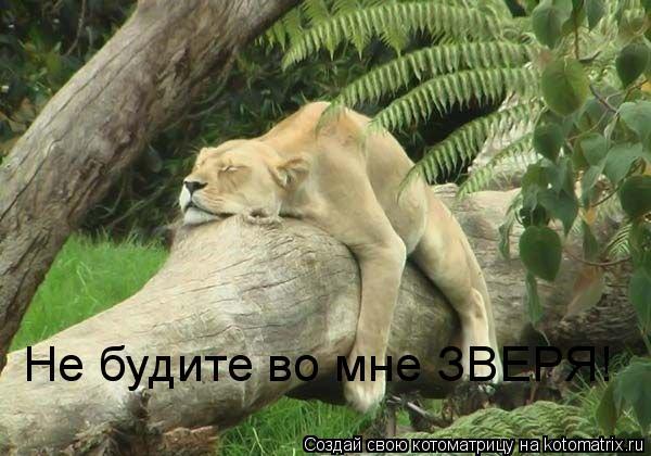 Котоматрица: Не будите во мне ЗВЕРЯ!