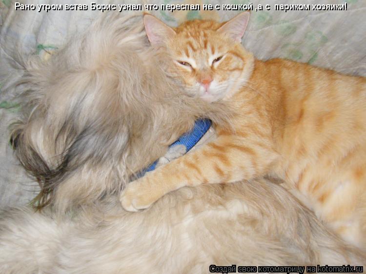 Котоматрица: Рано утром встав Борис узнал что переспал не с кошкой ,а с  париком хозяики!