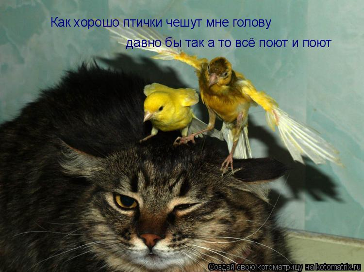 Котоматрица: Как хорошо птички чешут мне голову давно бы так а то всё поют и поют