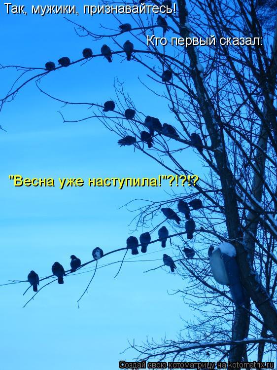 """Котоматрица: Так, мужики, признавайтесь! Кто первый сказал: """"Весна уже наступила!""""?!?!?"""