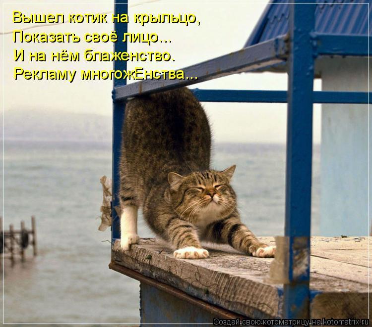 Котоматрица: Вышел котик на крыльцо, Показать своё лицо... И на нём блаженство. Рекламу многожЕнства...