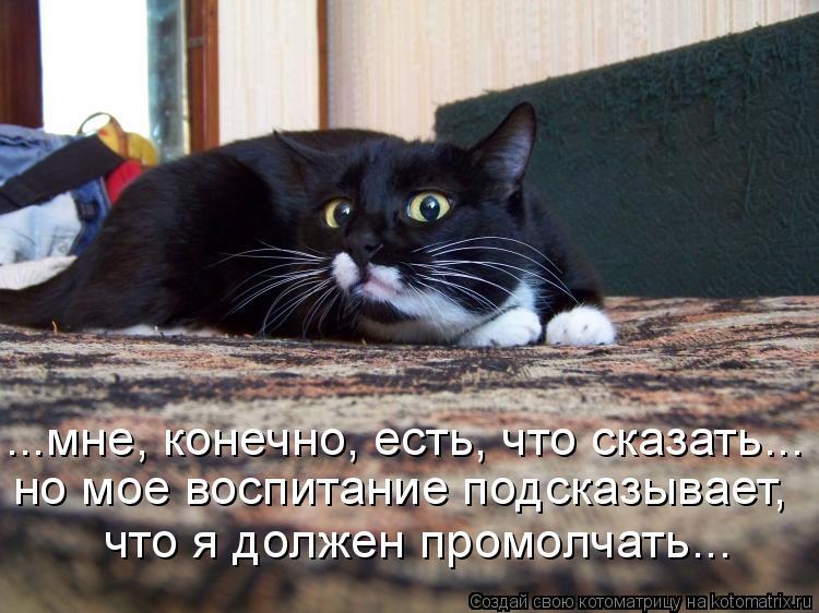 Котоматрица: ...мне, конечно, есть, что сказать... но мое воспитание подсказывает, что я должен промолчать...