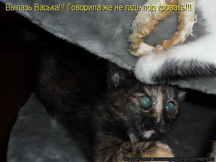 Котоматрица: Вылазь Васька!!! Говорила же не гадь под кровать!!!