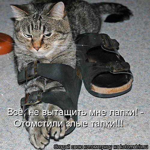 Котоматрица: Всё, не вытащить мне лапки! - Отомстили злые тапки!!!