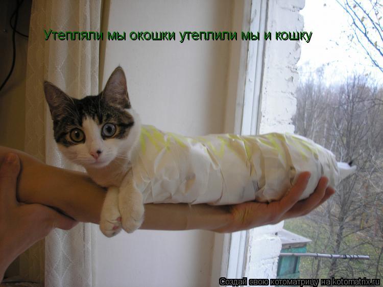 Котоматрица: Утепляли мы окошки утеплили мы и кошку