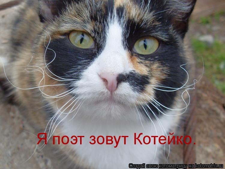 Котоматрица: Я поэт зовут Котейко.