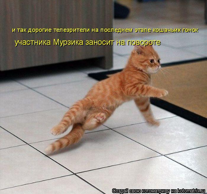 Котоматрица: и так дорогие телезрители на последнем этапе кошачьих гонок участника Мурзика заносит на повороте