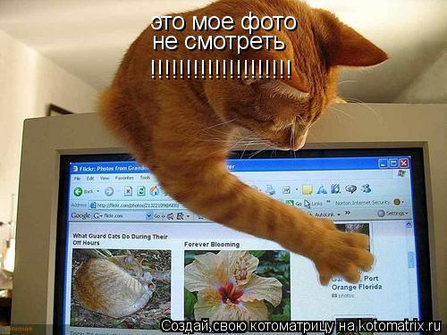 Котоматрица: это мое фото не смотреть !!!!!!!!!!!!!!!!!!!!