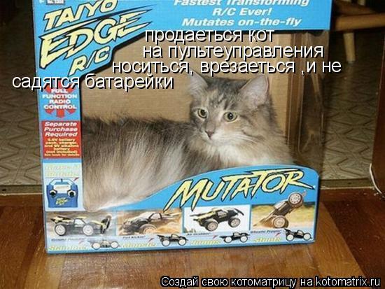 Котоматрица: продаеться кот на пультеуправления носиться, врезаеться ,и не  садятся батарейки