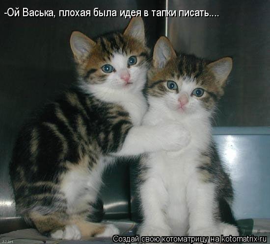 Котоматрица: -Ой Васька, плохая была идея в тапки писать....
