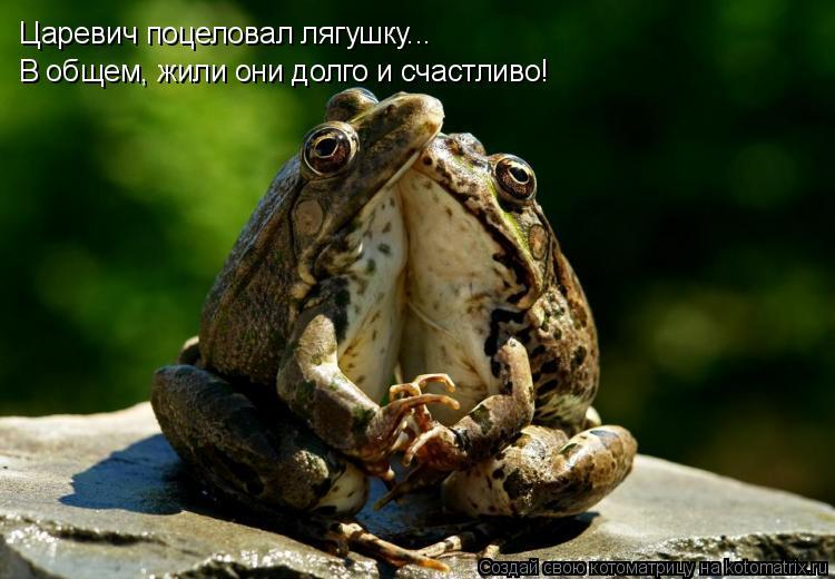 Котоматрица: Царевич поцеловал лягушку... В общем, жили они долго и счастливо!