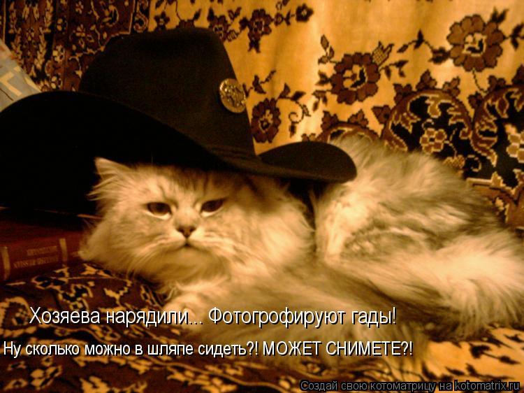Котоматрица: Хозяева нарядили... Фотогрофируют гады! Ну сколько можно в шляпе сидеть?! МОЖЕТ СНИМЕТЕ?!