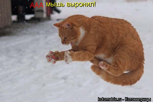 Котоматрица: AAA мышь выронил!