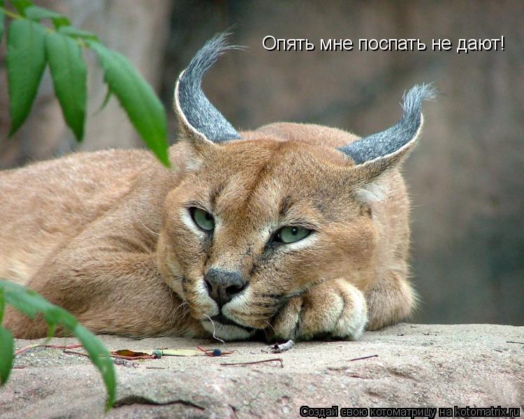 Котоматрица: Опять мне поспать не дают!