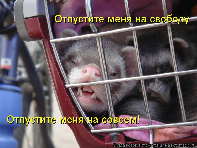 Котоматрица: Отпустите меня на свободу Отпустите меня на совсем!