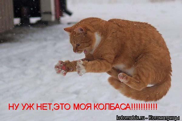 Котоматрица: НУ УЖ НЕТ,ЭТО МОЯ КОЛБАСА!!!!!!!!!!! НУ УЖ НЕТ,ЭТО МОЯ КОЛБАСА!!!!!!!!!!!