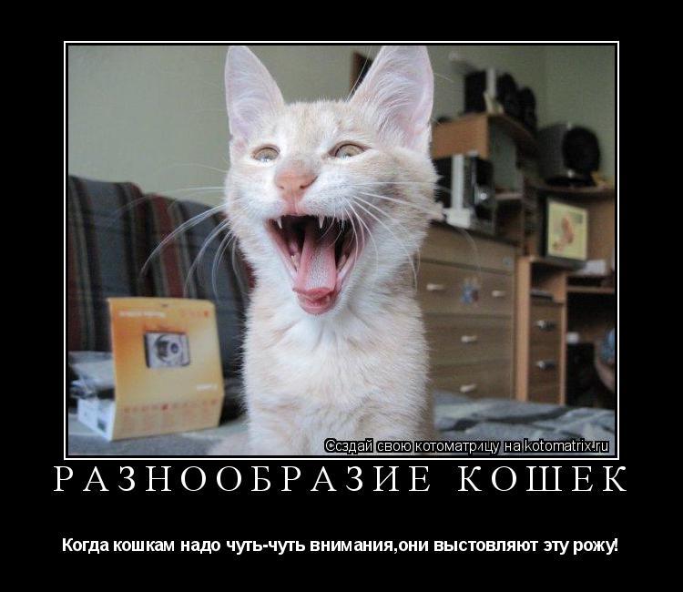 Котоматрица: Разнообразие кошек Когда кошкам надо чуть-чуть внимания,они выстовляют эту рожу!