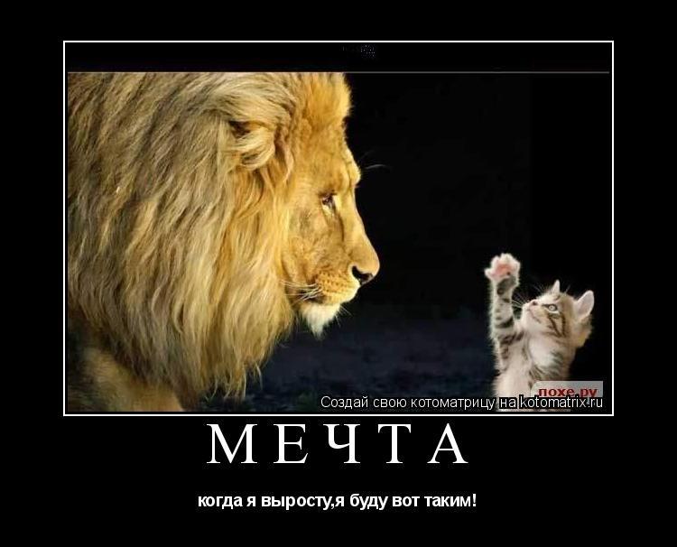 Котоматрица: мечта когда я выросту,я буду вот таким!