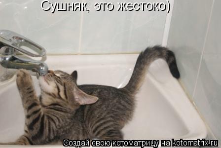 Котоматрица: Сушняк, это жестоко)