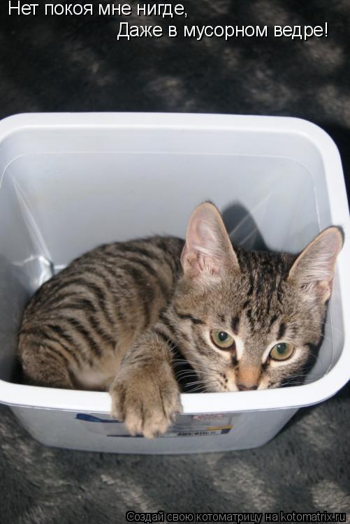 Котоматрица: Нет покоя мне нигде,  Даже в мусорном ведре!
