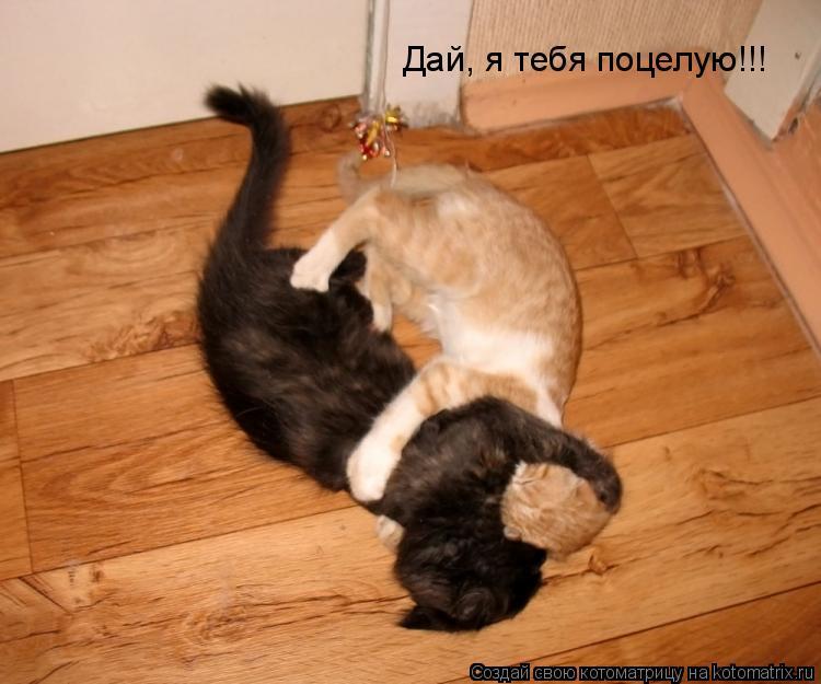 Котоматрица: Дай, я тебя поцелую!!!