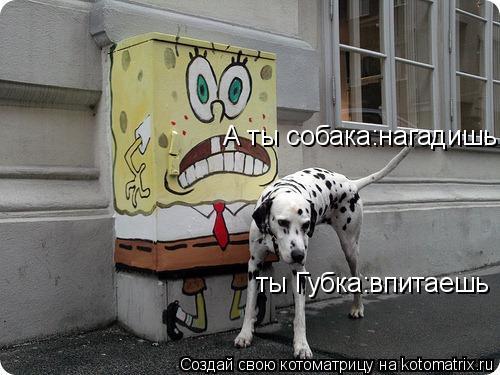 Котоматрица: А ты собака:нагадишь ты Губка:впитаешь
