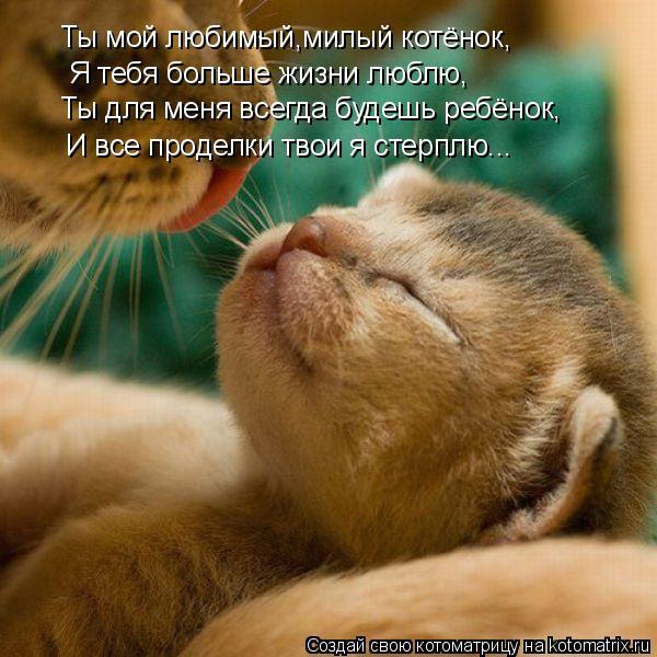 люблю тебя мой котёнок картинки