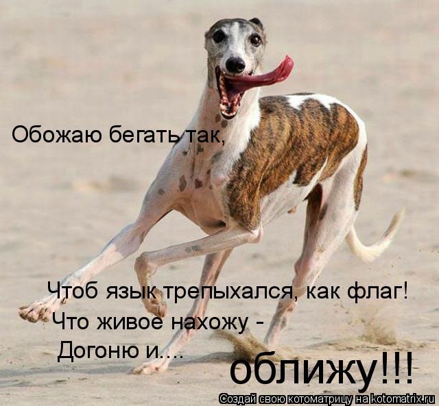 Котоматрица: Обожаю бегать так, Чтоб язык трепыхался, как флаг! Что живое нахожу - Догоню и.... оближу!!!