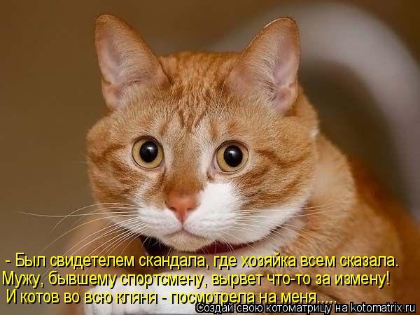 Котоматрица: И котов во всю кляня - посмотрела на меня..... - Был свидетелем скандала, где хозяйка всем сказала. Мужу, бывшему спортсмену, вырвет что-то за из