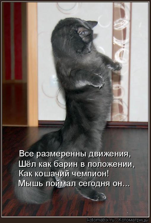 Котоматрица: Все размеренны движения, Шёл как барин в положении, Как кошачий чемпион! Мышь поймал сегодня он...