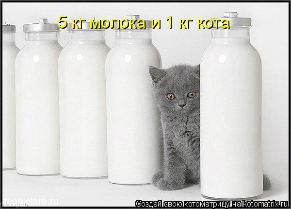 Котоматрица: 5 кг молока и 1 кг кота