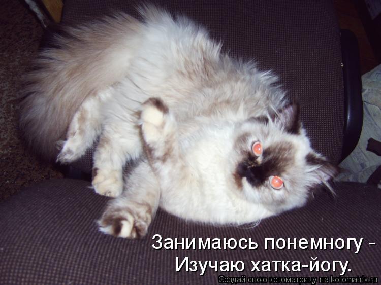 Котоматрица: Занимаюсь понемногу - Изучаю хатка-йогу.