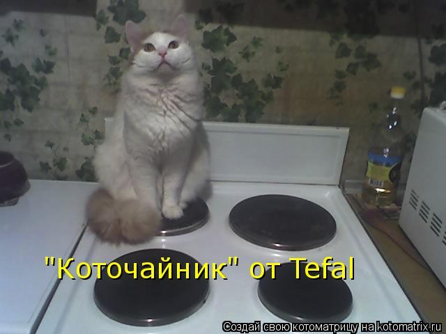 """Котоматрица: """"Коточайник"""" от Tefal"""