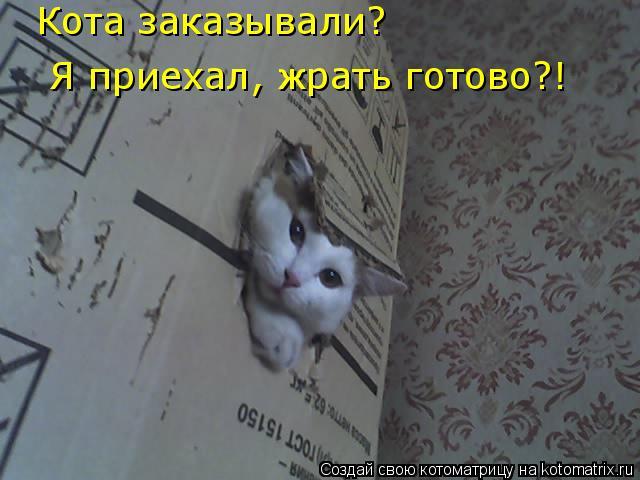 Котоматрица: Кота заказывали? Я приехал, жрать готово?! Кота заказывали?  Я приехал, жрать готово?!