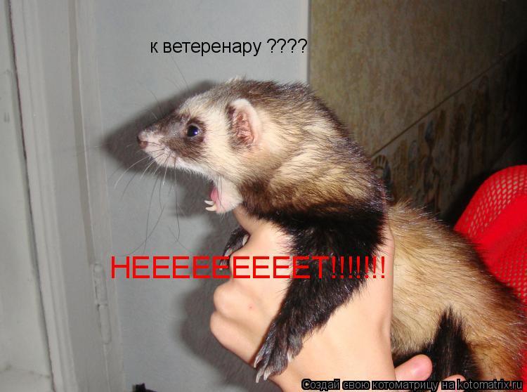 Котоматрица: к ветеренару ???? НЕЕЕЕЕЕЕЕЕТ!!!!!!!