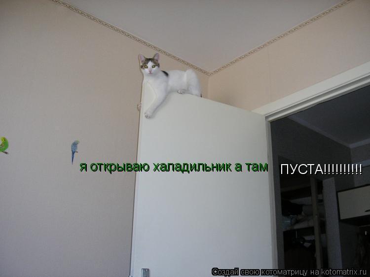 Котоматрица: я открываю халадильник а там ПУСТА!!!!!!!!!!
