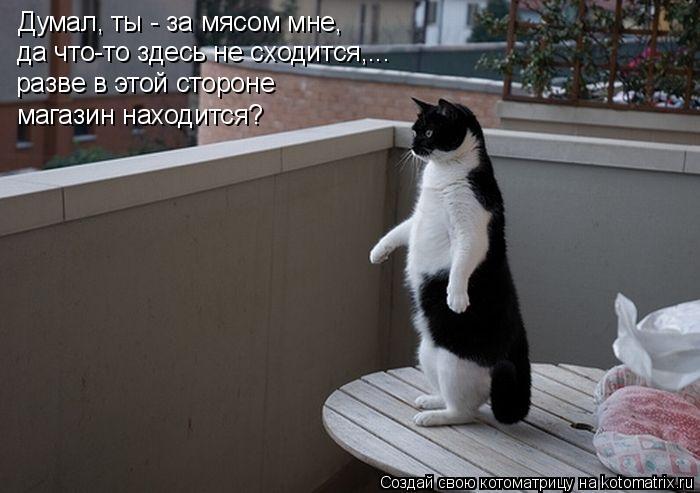 Котоматрица: Думал, ты - за мясом мне, да что-то здесь не сходится,... разве в этой стороне магазин находится?