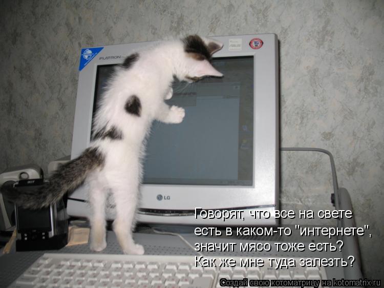 """Котоматрица: есть в каком-то """"интернете"""", Говорят, что все на свете значит мясо тоже есть? Как же мне туда залезть?"""