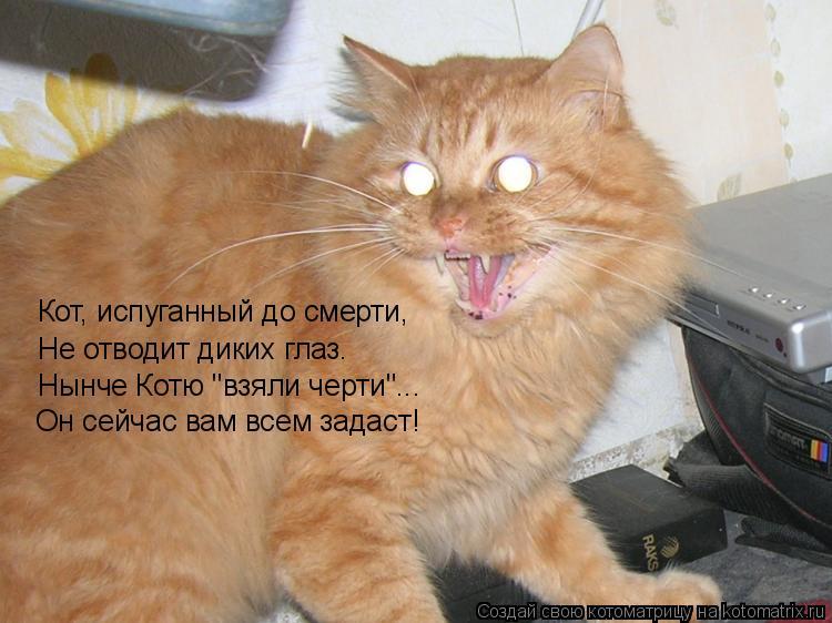 """Котоматрица: Кот, испуганный до смерти, Не отводит диких глаз. Нынче Котю """"взяли черти""""... Он сейчас вам всем задаст!"""