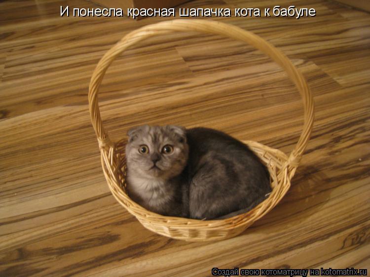 Котоматрица: И понесла красная шапачка кота к бабуле